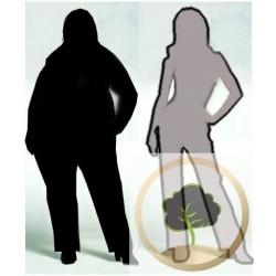 Infusion pour maigrir