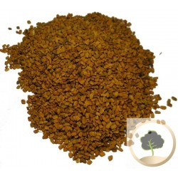 Fenugreek (halba in Arabic)