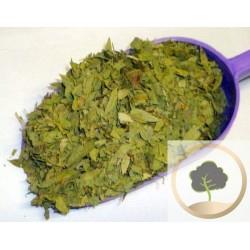 500 g de hojas de Sen
