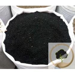 Всего Чернушка (черные семена)