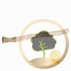 Siwak (Zahnputzhölzchen) Zitrone