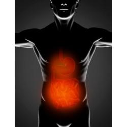 Kruiden natuurlijke maag en darmen