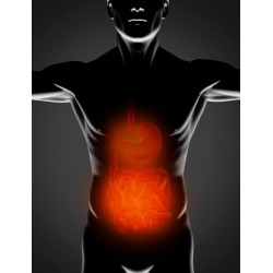 Stomach and intestinal healing herbs