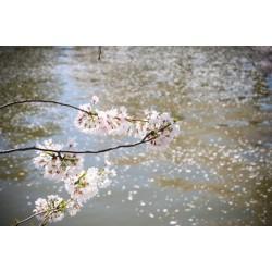 ماء بروح الزهر
