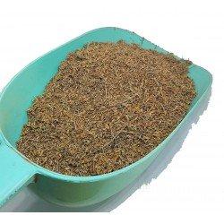 Pflanze Artemisia oder CHIH