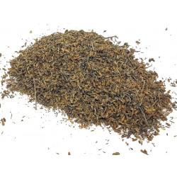 Plant Artemisia of CHIH