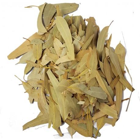 Eucalyptus Blatt