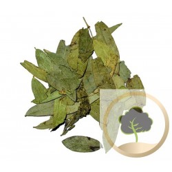 Senna leaves herbal tea (Sana Makki)
