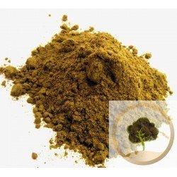 Sidr (jujubier) moulu - 50 g