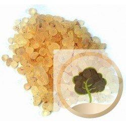 Gummi arabicum