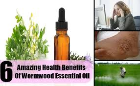 Wormwood oil