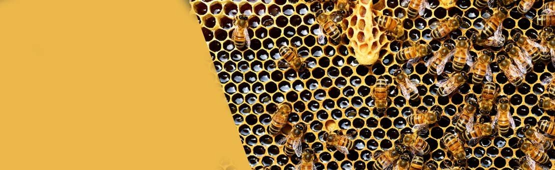 Trouver les meilleurs miels